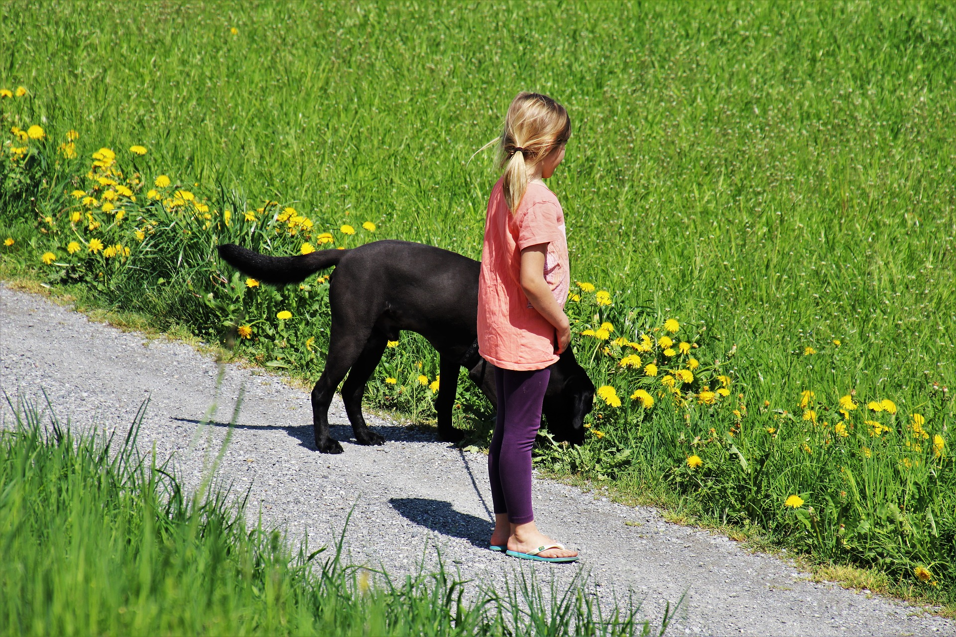 Buddy dog with young girl